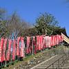 009 - Nara Park
