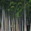 07 - bamboo forest