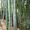 08 - bamboo