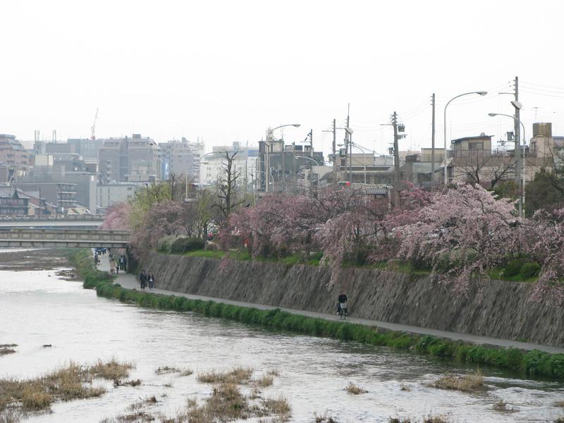 01 - sakuras and stream
