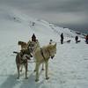 Karen Andy Dogsled Skagway 2