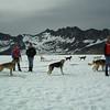 Dog sled Skagway