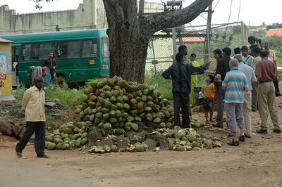 A coconut vendor outside Bannerghatta zoo.