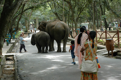 Pam greets the elephants strolling the lanes inside Bannerghatta zoo.