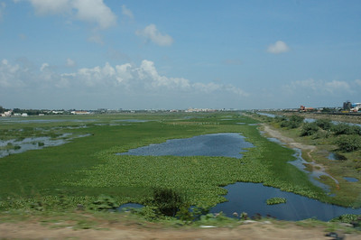 Wetlands along the East Coast Road, south out of Chennai.