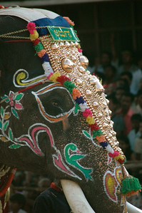 Each elephant is beautifully painted, with gold ornaments. Dasara parade in Mysore.