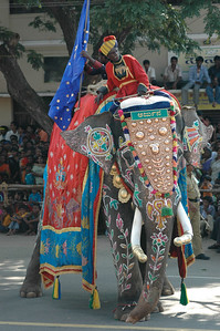 uh-oh, the elephant spreads his legs... [Dasara parade in Mysore.]