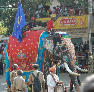 Elephants arrive! the same 12 elephants every year. Dasara parade in Mysore.