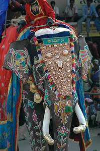 Ah! an elephant turns toward me... [Dasara parade in Mysore.]