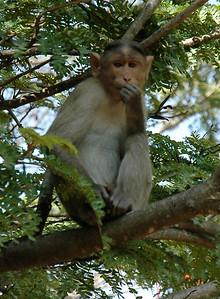 India. Bangalore. IISc. Nature.