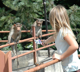 Mara gives a candy wrapper to the IISc monkeys.