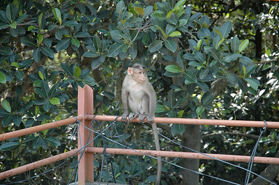 Macaques are frequent visitors to our rooftop.