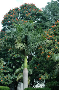 a palm, and more of those red flowers.