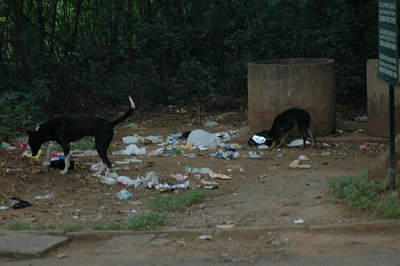 Stray dogs make a mess of the trash depots on IISc campus.