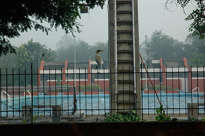 IIT Kanpur - olympic-size swimming pool.