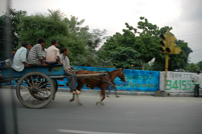 Horse-drawn carts in Kanpur.