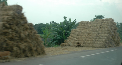 Mountains of straw (I think).