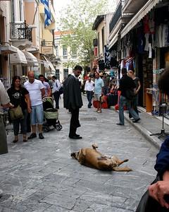AthensPlakaDogSleeping8x10.4372