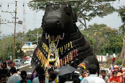 This statue of Nandi is carved from a single stone; at Chamundi temple in Mysore.