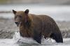 Bear0597