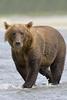Bear0239