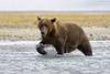 Bear0009