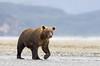 Bear0113