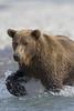 Bear0345