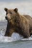 Bear0343