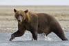 Bear0018