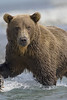 Bear0353