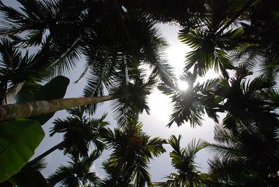 Tall palms....