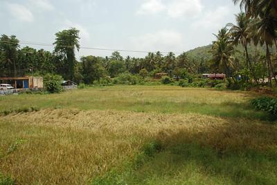 Rice paddie