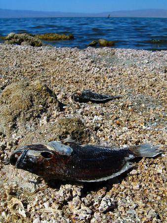 2009-05 Salton Sea