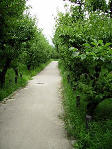 Osakajyo's Plum Garden