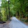 Beech Forest Aspiring National Park