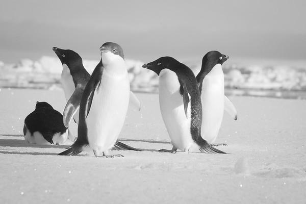 2009 Antartica