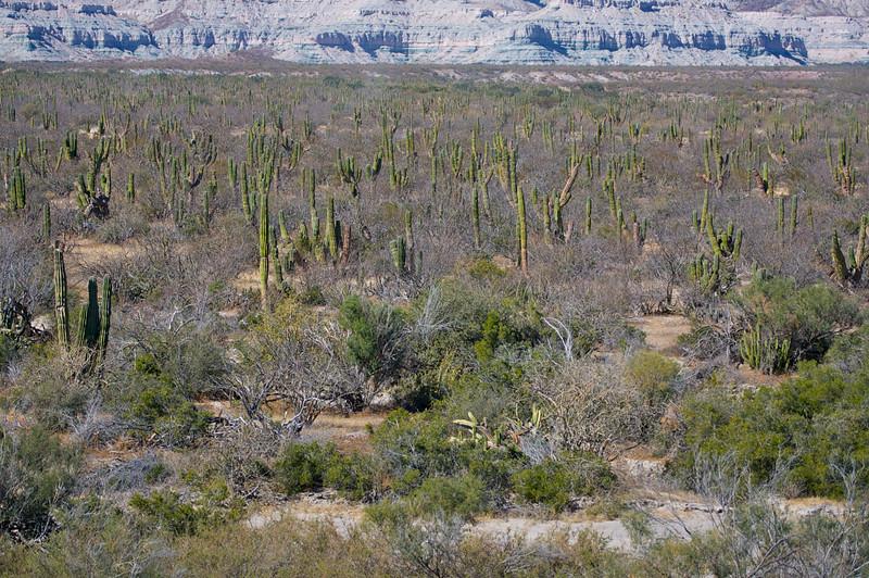 typical baja landscape