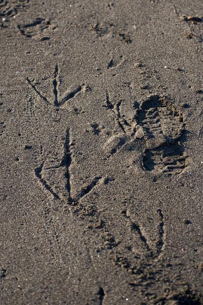 Frigatebird footprint next to mine