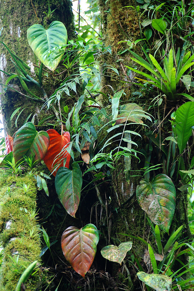 Here's a sense of a walk through a rain forest.