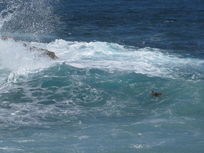 Turtle body surfing