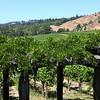 Navarro Vineyard in the Anderson Valley.