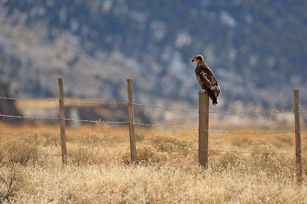 2009 North Yellowstone - Lamar Valley