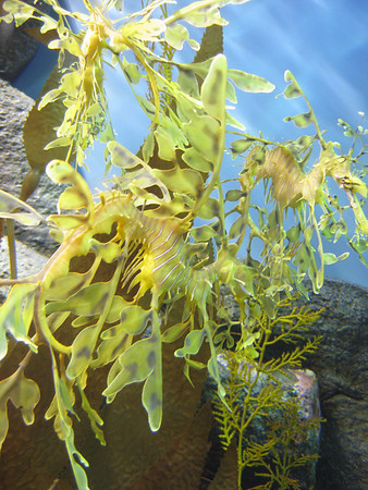 Monterey Bay Aquarium #5.