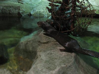 Monterey Bay Aquarium #4.