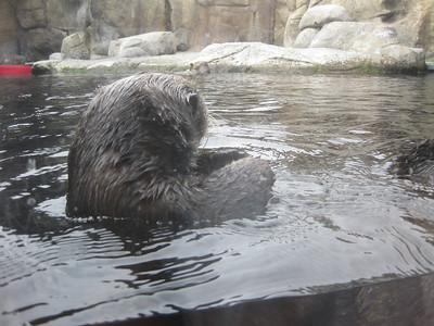 Monterey Bay Aquarium #1.