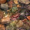 2009 08 13 No Cal Coast 048-edited