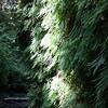 2009 08 13 No Cal Coast 017