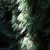 2009 08 13 No Cal Coast 019