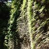 2009 08 13 No Cal Coast 037